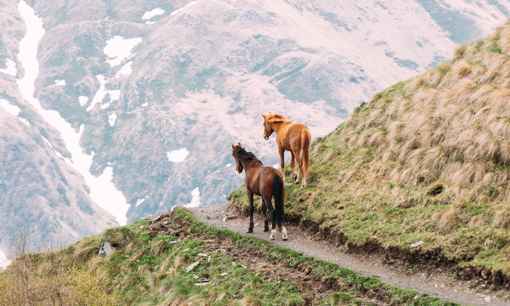 two-horses-grazing-on-green-mountain-slope